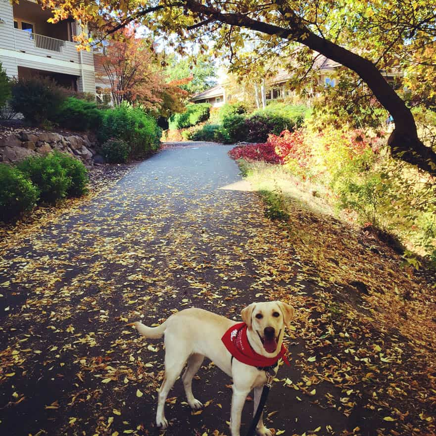 Dog on road with fall colors | Davenport Centennial